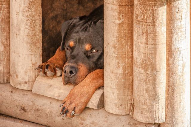 מלונה לכלב - למה אתם חייבים לקנות לכלב שלכם?