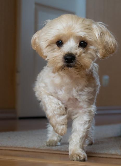 ACANA לכלב באנימל שופ