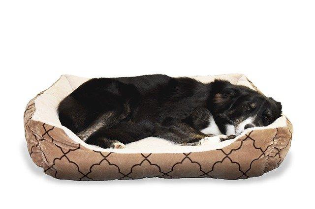 מיטות כלבים עמידות ונוחות